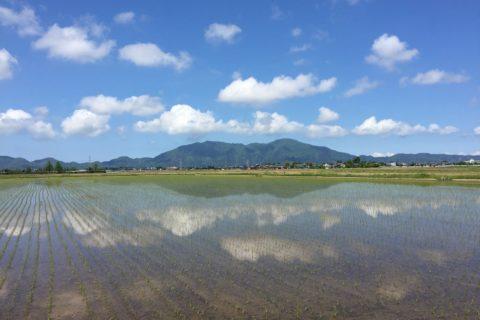 五月の弥彦山