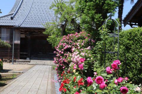 バラと寺院